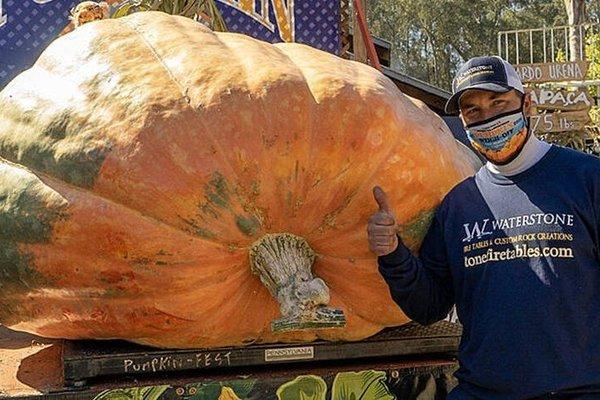 Quả bí ngô nặng hơn 1 tấn mừng Halloween