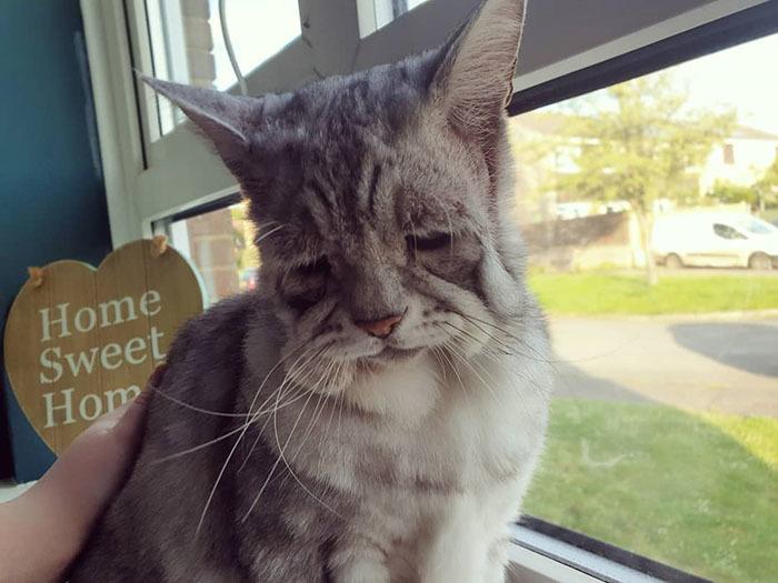 Gặp gỡ con mèo sở hữu gương mặt buồn chán nhất thế giới