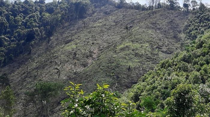 Hiện cả nước có bao nhiêu ha rừng phòng hộ?