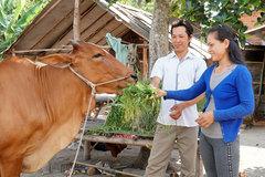 Tây Ninh: Tỷ lệ hộ nghèo tại các huyện giảm nhanh