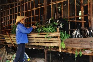 Bình Phước: Giải pháp thoát nghèo ở huyện Lộc Ninh