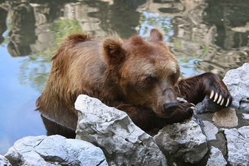 Trước mặt du khách, nhân viên sở thú TQ bị đàn gấu tấn công tới chết