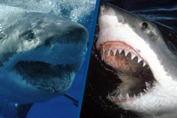 Bí ẩn loạt cá mập hung thần tấn công người vùng biển Australia