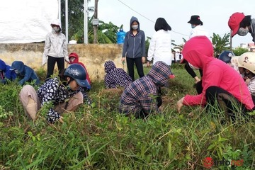 Toàn dân giữ vững tiêu chí môi trường nông thôn mới