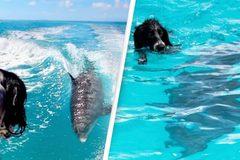 Tình bạn thân thiết hiếm có giữa chó nhà và cá heo suốt gần 1 thập kỷ