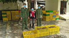BĐBP Quảng Ninh bắt giữ hơn 32 nghìn gia cầm giống nhập lậu