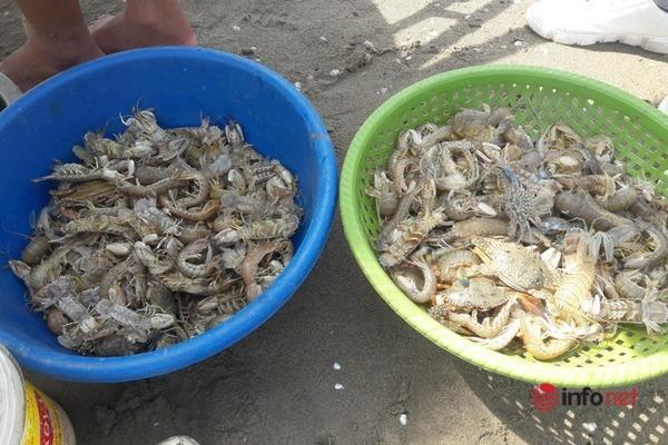 Nghệ An: Mặc bão số 8 uy hiếp, ngư dân đảo Lan Châu vẫn bám biển