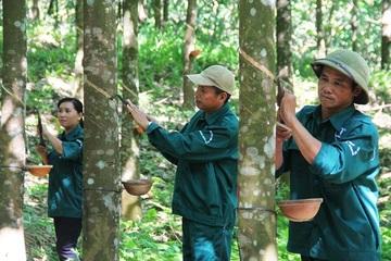 Bình Phước: Phú Riềng xây dựng nền nông nghiệp công nghệ cao