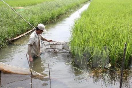 Sóc Trăng: Phát triển bền vững với mô hình nông nghiệp cao