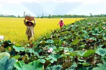 Hiệu quả từ Liên kết phát triển bền vững tiểu vùng Đồng Tháp Mười