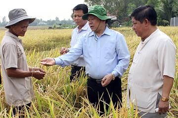 Xây dựng Đề án phát triển nông nghiệp bền vững, thích ứng với biến đổi khí hậu