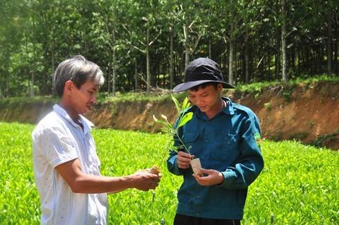 nông thôn mới,Quảng Nam