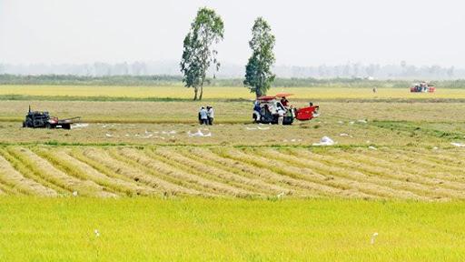 Giải pháp chuyển đổi tư duy sản xuất nông nghiệp sang kinh tế nông nghiệp