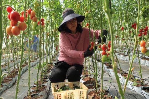 Liên minh HTX Lâm Đồng thúc đẩy phát triển HTX nông nghiệp công nghệ cao, xây dựng nông thôn mới