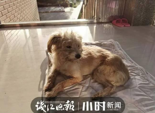 Chủ bỏ quên, chú chó tự mình tìm đường về cách nhà 60 km trong 26 ngày