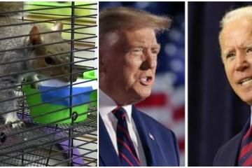 Hài hước xem 'tiên tri' sóc, mèo dự đoán kết quả Bầu cử tổng thống Mỹ 2020