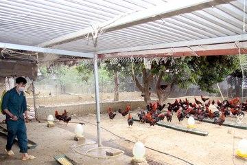 Lai Châu: Huyện Sìn Hồ chủ động phòng, chống dịch cúm gia cầm