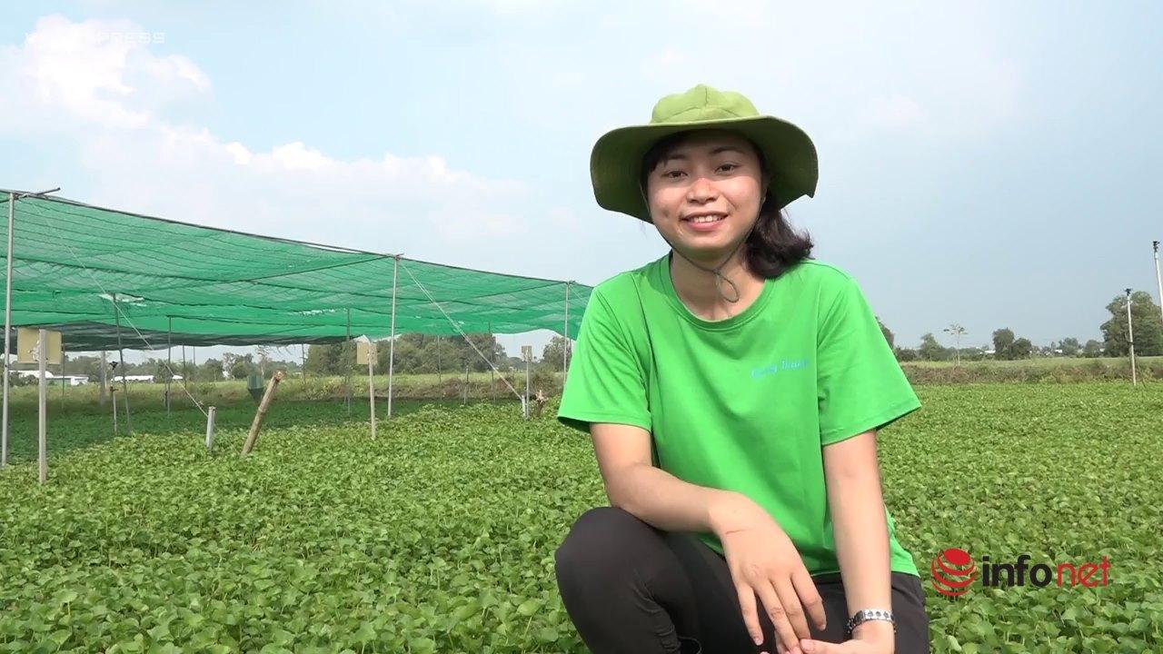 Cô gái trồng rau má xuất khẩu đi châu Âu từng không dám gọi vốn vì sợ thất bại