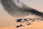 Mỹ đã có 'thuốc đặc trị' để tiêu diệt UAV 'bầy đàn' của Trung Quốc