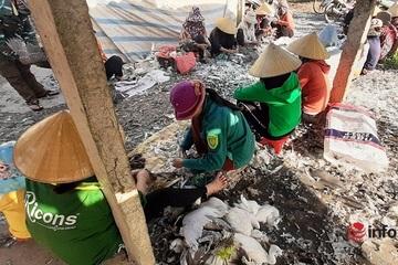 Nghệ An: Chim trời bị giăng bẫy tuyệt diệt, bày bán la liệt bất chấp lệnh cấm