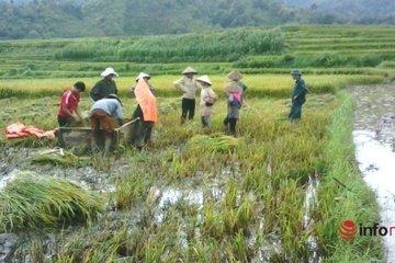 Nhiều chính sách giảm nghèo bền vững tại Điện Biên