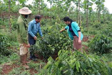 Gia Lai lấy Nông – Lâm nghiệp để phát triển bền vững