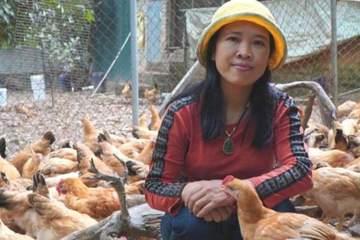 Bà chủ trang trại gà ri vi sinh 'độc nhất vô nhị' cho gà ăn thảo dược, bán giá gấp đôi vẫn cháy hàng