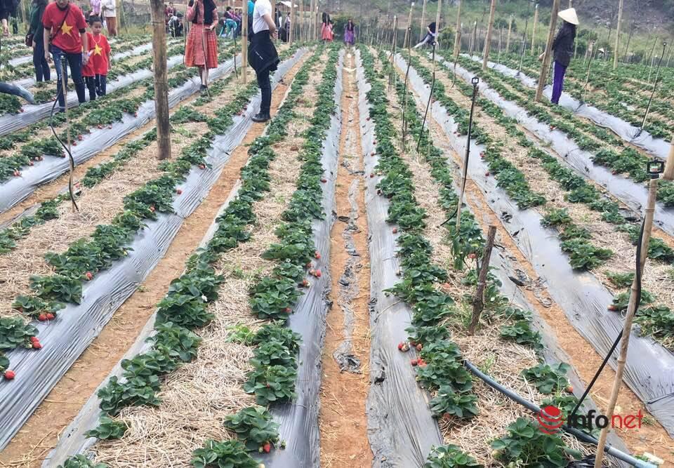 Mộc Châu thay đổi nhờ chính sách giảm nghèo bền vững
