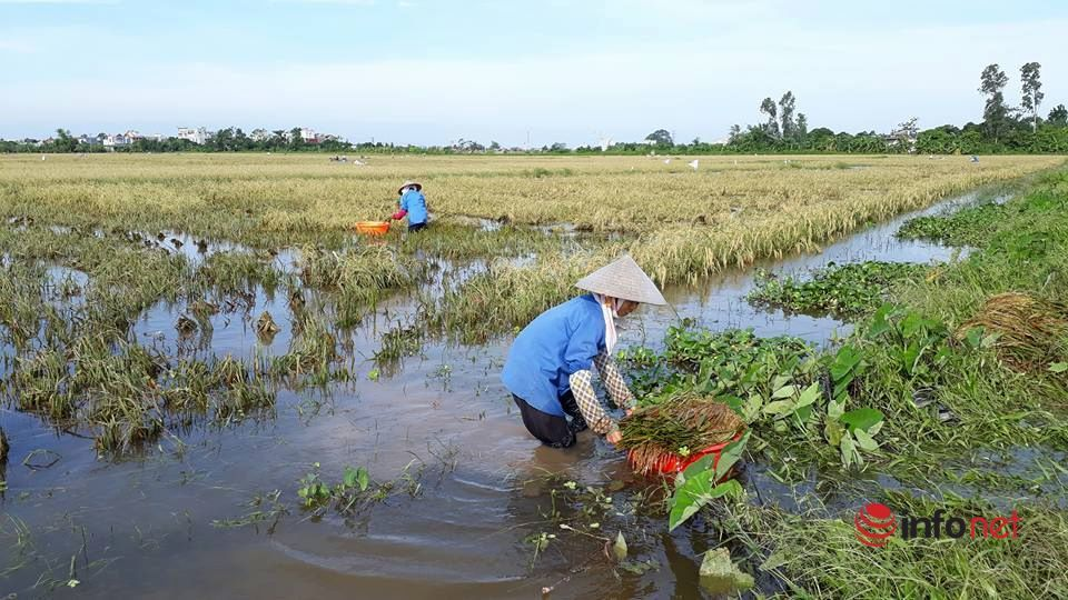 Thái Bình phát động tháng cao điểm vì người nghèo