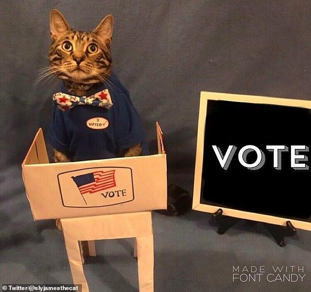 Loạt ảnh thú cưng đi 'Bầu cử Tổng thống Mỹ' gây sốt
