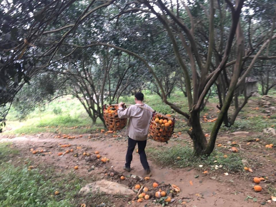 Phát triển hàng hóa giúp Hà Giang giảm tỷ lệ hộ nghèo