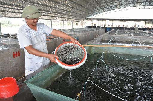 Quảng Ninh: Công tác hỗ trợ vốn cho hộ nghèo tại huyện Đầm Hà