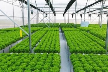 Sản xuất rau sạch nhờ ứng dụng kết quả khoa học công nghệ