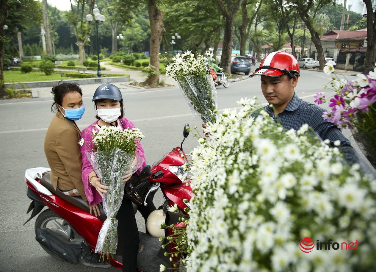 Hà Nội: Cúc họa mi tinh khôi 'xuống phố' đón đông về