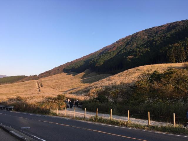 Vẻ đẹp mùa thu Nhật Bản với đồi cỏ lau đẹp lịm tim