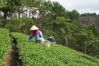 Kịp thời các nguồn vốn để thực hiện các chính sách giảm nghèo ở Lạng Sơn