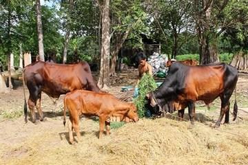 Tây Ninh: Chương trình 135 giúp nhiều hộ thoát nghèo