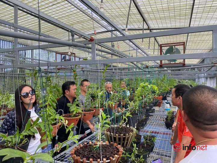 Sơn La: Nhiều hộ đồng bào dân tộc giảm nghèo nhờ trồng lan