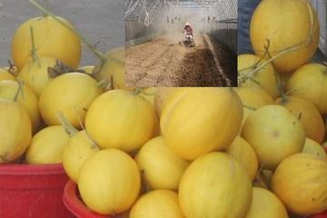 """Từ """"trời Tây"""" về quê, vợ chồng Việt kiều bỏ tiền tỷ làm... nông dân chính hiệu"""