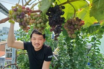 Ông bố trẻ Sài Gòn biến sân thượng thành khu vườn sai trĩu quả
