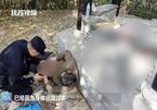 Nghĩ quẩn khi mẹ qua đời, chàng trai Trung Quốc gặp cái kết 'không ngờ'