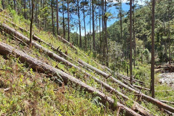 Đã xác định được 6 đối tượng trong vụ phá rừng tại Tiểu khu 132 ở Lâm Đồng