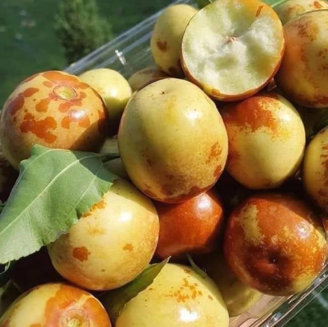 Loại quả Trung Quốc thâm xỉn như quả thối hỏng, về Việt Nam bán vài trăm nghìn đồng/kg