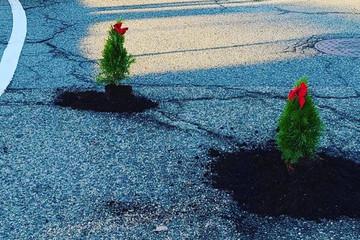 Sự thật đằng sau chuyện trồng cây thông trong ổ gà 'đón Giáng sinh sớm'