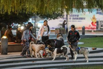 Tranh cãi luật cấm dắt chó đi dạo trong thành phố ở Trung Quốc