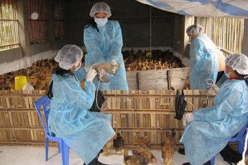 Phòng bệnh cúm gia cầm cho đàn gia cầm trong mùa Đông