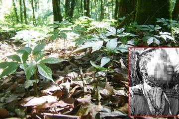 Quảng Nam: Đi thăm vườn sâm, người đàn ông bị gấu rừng tấn công
