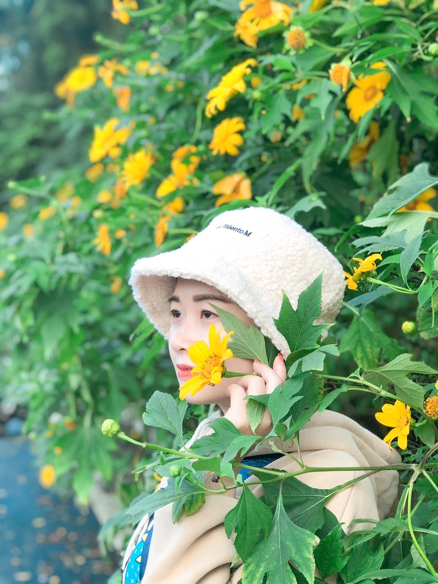 Hoa dã quỳ Ba Vì 9