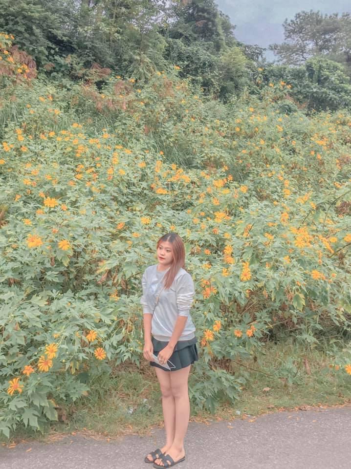 Hoa dã quỳ Ba Vì 11