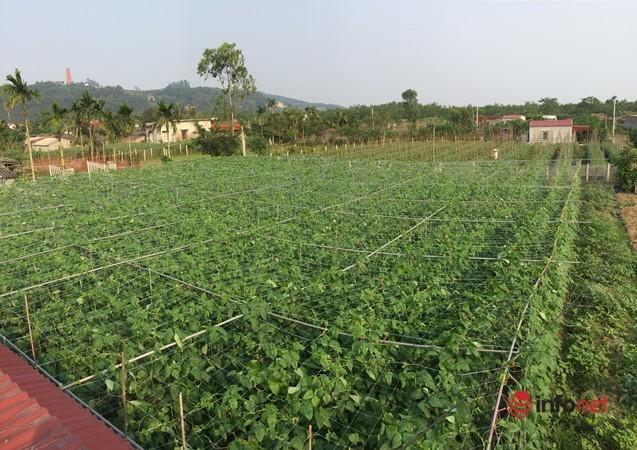 9X chế biến món ăn lạ từ bí đỏ và đậu đũa muối chua, xuất khẩu thu tiền tỷ